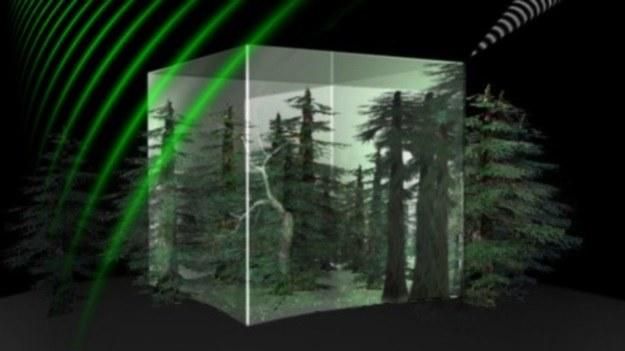 ESA chce przyczynić się do ochrony ziemskiej biomasy /materiały prasowe