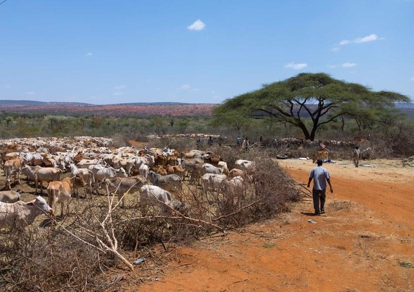 Etiopia /Eric lafforgue/Exclusivepix Media /East News