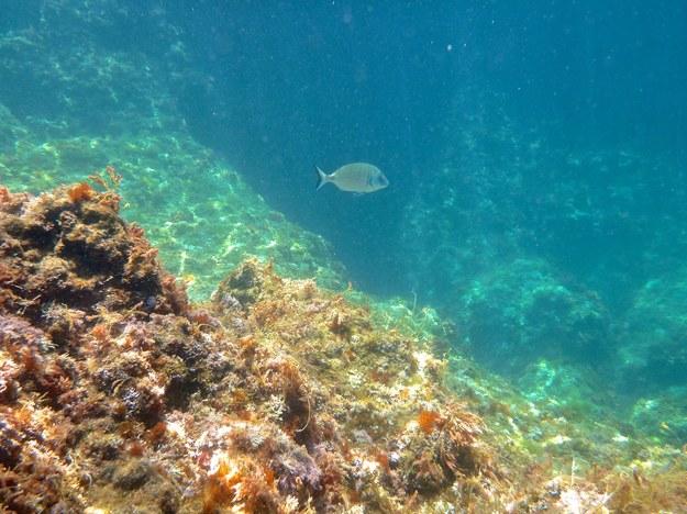 Europejski projekt badań nad biologią mórz będzie prowadzony  przy współudziale naukowców z Uniwersytetu Gdańskiego /123RF/PICSEL