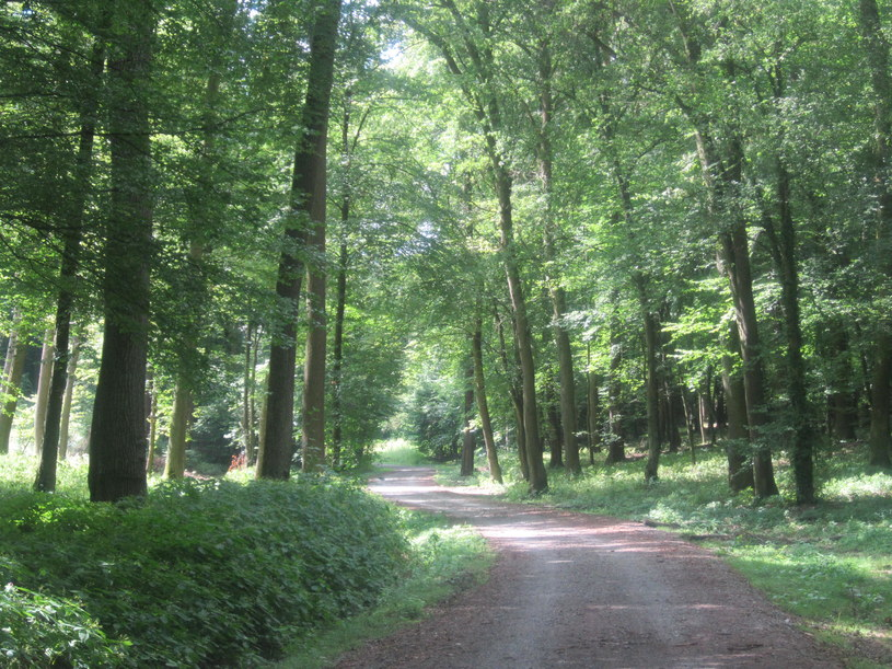 """""""Europejskie lasy powoli odradzają się po stuleciach ich rabunkowej eksploatacji i wyrębu"""" /EKM /INTERIA.PL"""