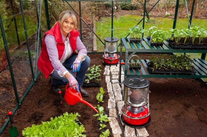 Ewa Wachowicz w przydomowe szklarni hoduje pomidory, ogórki, sałatę oraz kalarepę /archiwum prywatne