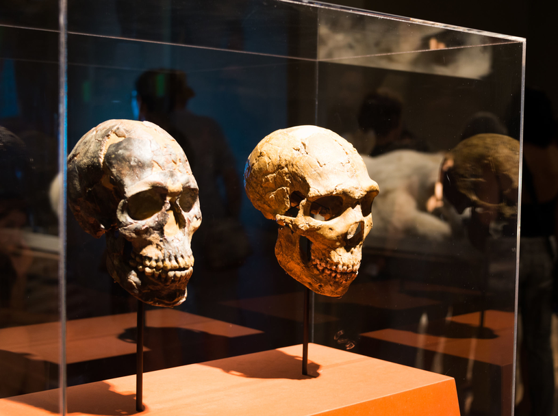 Datowanie najwcześniejszych ludzkich kości