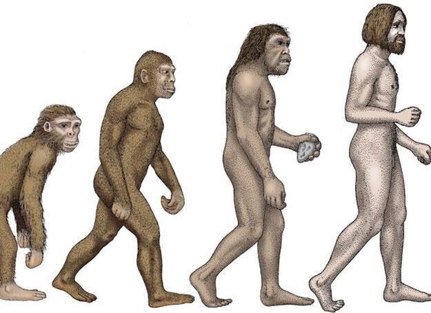 Ewolucja nadal budzi wiele emocji /East News