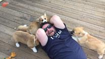Facet został zaatakowany przez gromadę szczeniaków