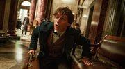 """""""Fantastyczne zwierzęta i jak je znaleźć"""": Życie po Harrym Potterze"""