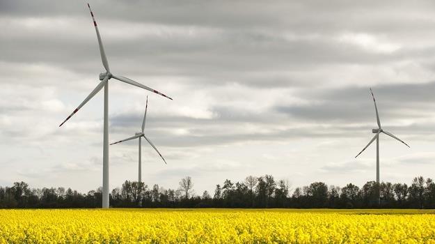 Farma wiatrowa w Bystrej na Pomorzu. Fot. Michał Kosc /Reporter