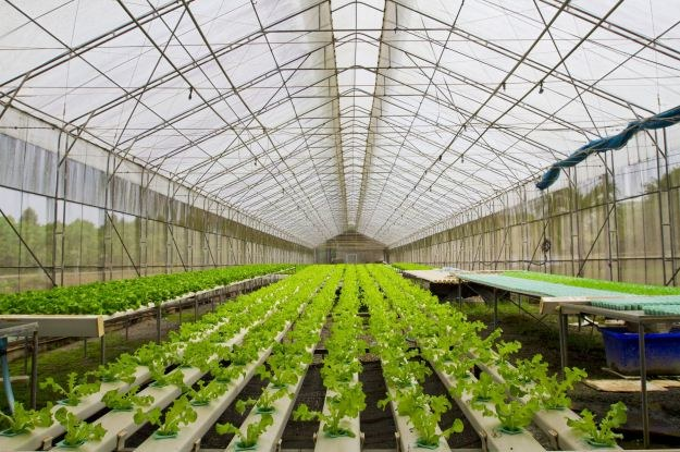 Farmy hydroponiczne to przeszłość, przyszłość to nanotechnologia w żywności /123RF/PICSEL