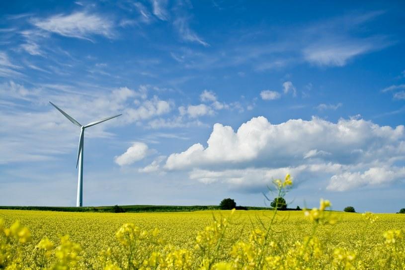 Farmy wiatrowe są powszechnym elementem duńskich krajobrazów /123RF/PICSEL