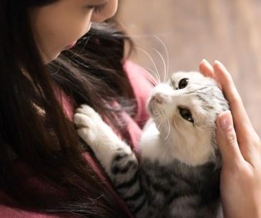 Felinoterapia: Czy koty mogą nas leczyć?