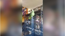 Figlarna papuga śpiewa w swojej klatce