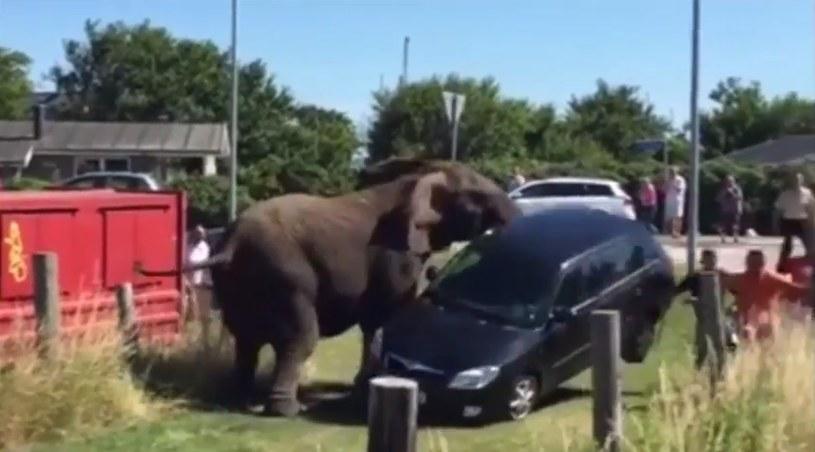 Film pokazuje, jak silne sa słonie /YouTube