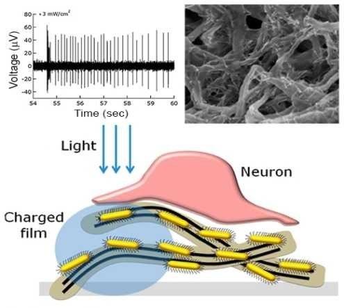 Film z półprzewodnikowych nanoprętów i węglowych nanorurek może przywrócić wzrok /materiały prasowe