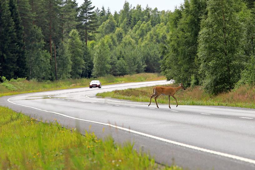 Finowie mocno celebrują zbawienny kontakt z naturą /123RF/PICSEL