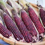 Fioletowa kukurydza: Wspiera serce i wzmacnia ochronę przed nowotworem