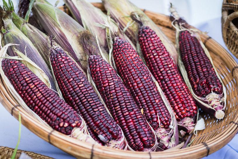 Fioletowa kukurydza /©123RF/PICSEL