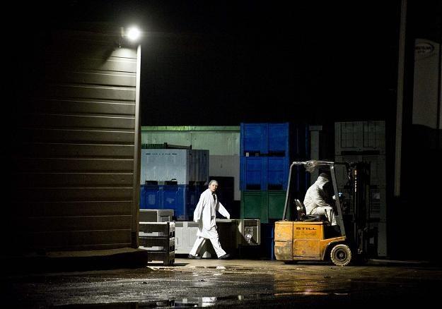 Firma mięsna Willy Selten w Oss (Holandia) /AFP