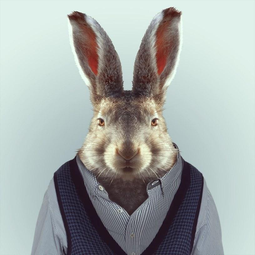 Firmowe króliczki omijaj szerokim łukiem! /East News