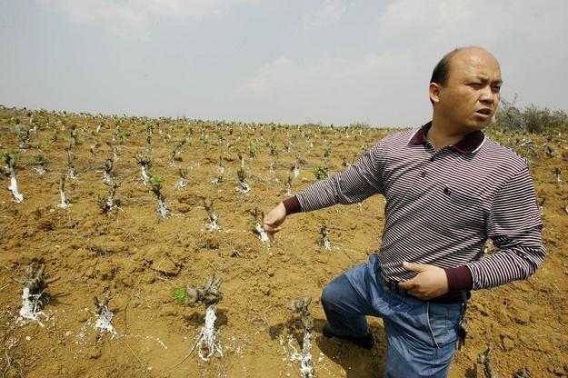 Firmy i gospodarstwa rolne z rosnącą determinacją szukają pracowników na Wschodzie /Agencja SE/East News