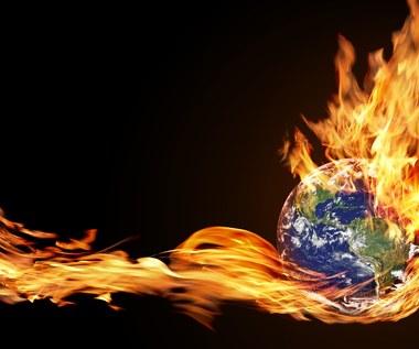 Fit for 55: ZPP o celach klimatycznych kosztem wycinania lasów