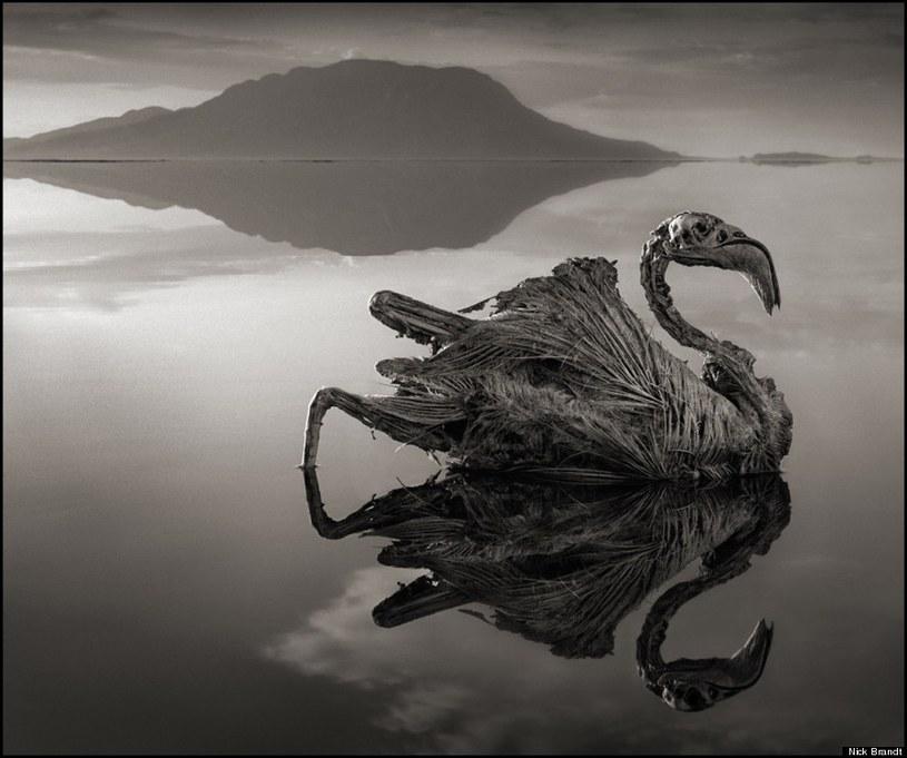 """Flaming wyrzucony przez jezioro na brzeg, """"ożywiony"""" na fotografii Brandta /Nick Brandt /materiały prasowe"""