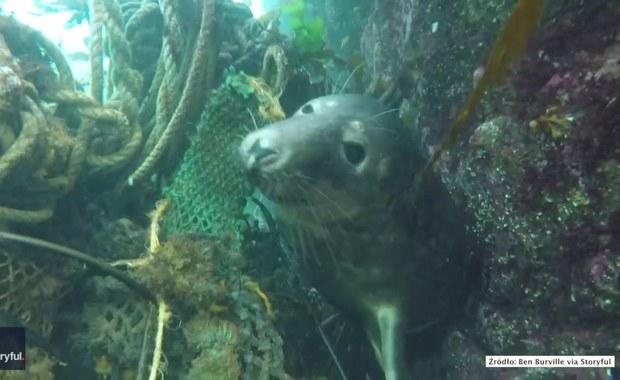 Foka zaplątała się w sieć rybacką. Udało jej się oswobodzić