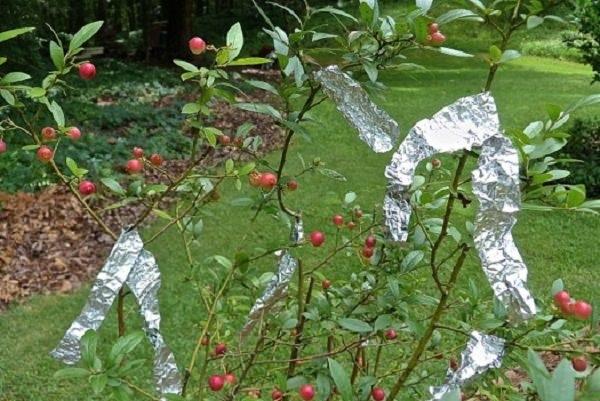 folia aluminiowa ogród /© Photogenica