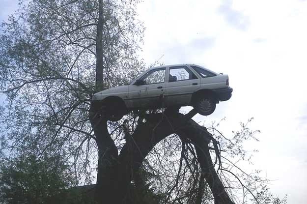 Ford escort wisiał na konarze drzewa przy polnej drodze. Zdjęcie dzięki uprzejmości mieszkańców Lubczyna /