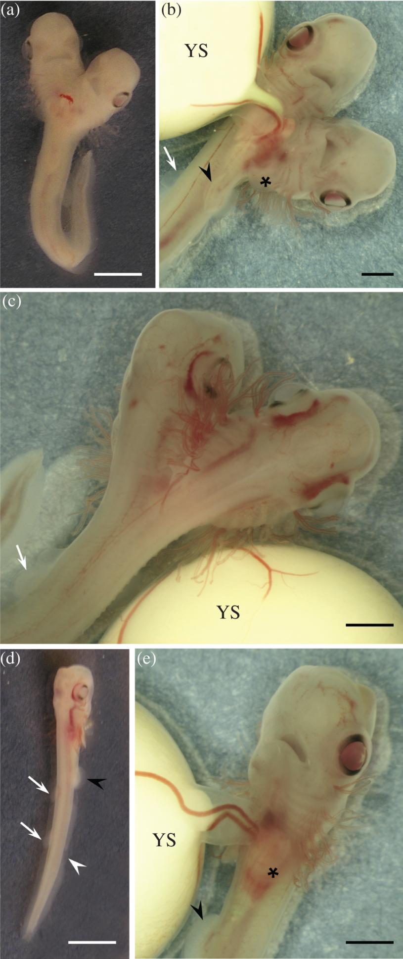 Fot. Journal of Fish Biology /materiały prasowe