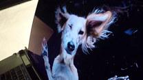 Fotografia psów w aranżacji łamiącej schematy