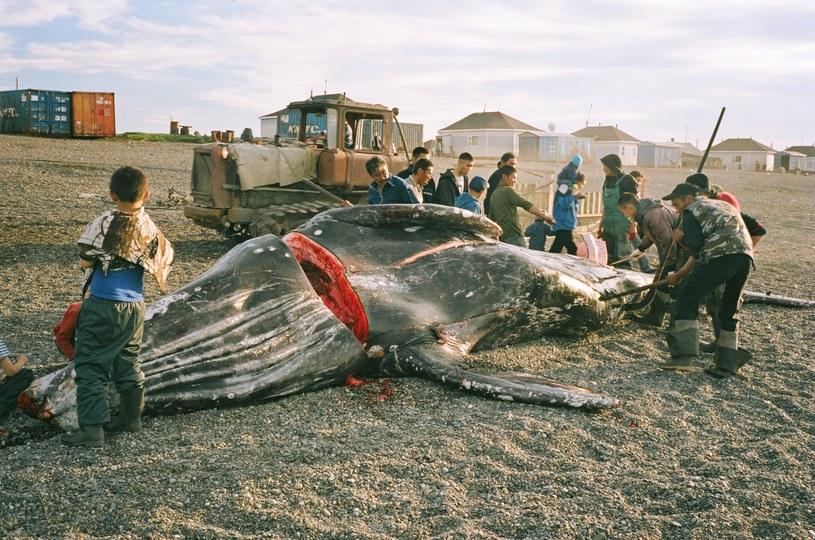 """Fotos z filmu """"Wieloryb z Lorino"""" w reżyserii Macieja Cuske /materiały prasowe"""