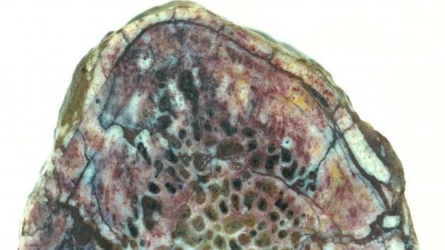 Fragment kości z białkiem dinozaura /fot. Robert Reisz /materiały prasowe