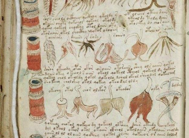 Fragment stronicy Manuskryptu Voynicha /MWMedia
