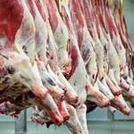 Francja: Znaleziono prawie 800 kg mięsa chorych krów z Polski