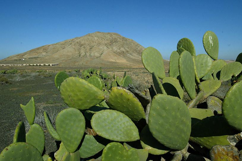 Fuerteventura długo pozostawała poza zainteresowaniem turystów... /AFP