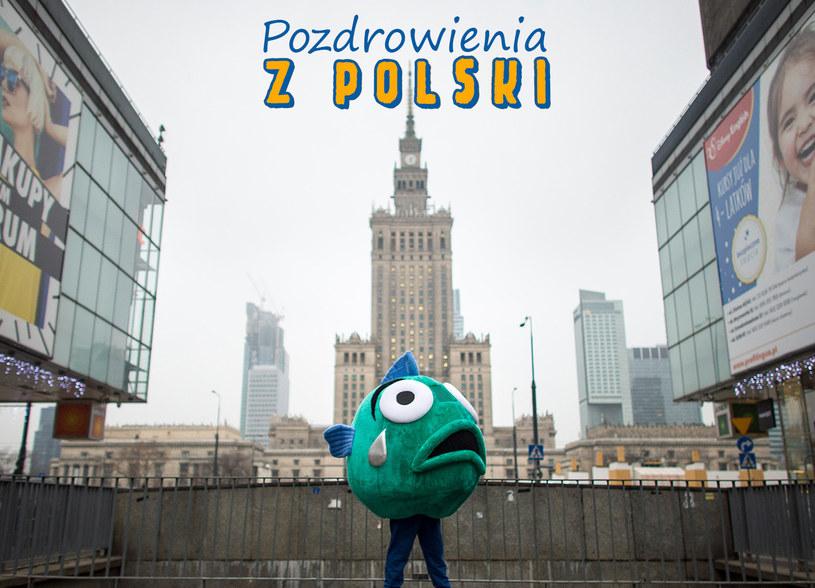 Fundacja Compassion Polska i współpracujący z nią eksperci są zgodni: ostatecznym rozwiązaniem problemu cierpienia żywych karpi byłby zakaz sprzedaży żywych ryb w Polsce /INTERIA.PL/materiały prasowe