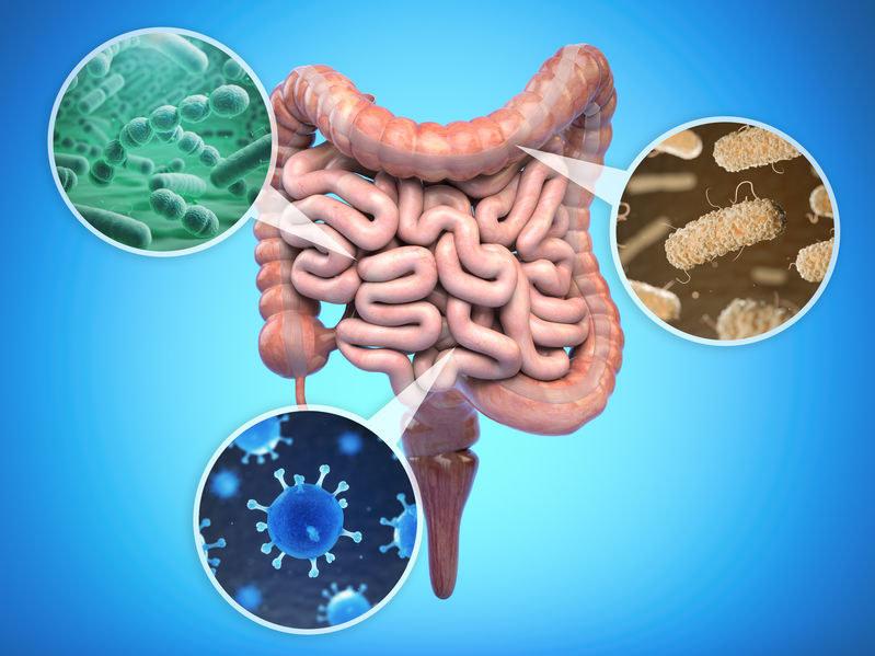 Funkcje mikrobiomu /©123RF/PICSEL