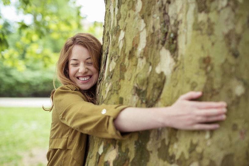 G Wybierz drzewo dorodne, zdrowe, bez zgrubień, huby i jemioły /123RF/PICSEL
