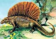 Gad kopalny, Dimetrodon incisivus /Encyklopedia Internautica