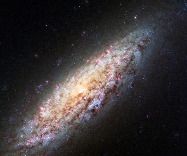 Galaktyka NGC 6503. /NASA