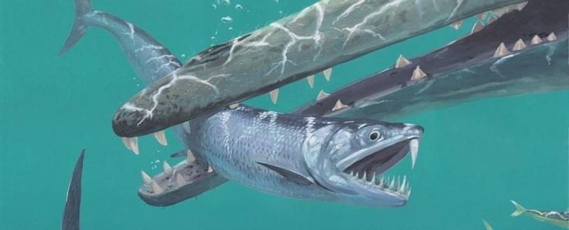 Gatunek Monosmilus chureloides prawdopodobnie polował na inne ryby /materiały prasowe