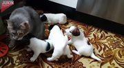 Gburowaty kot oczarował szczeniaki