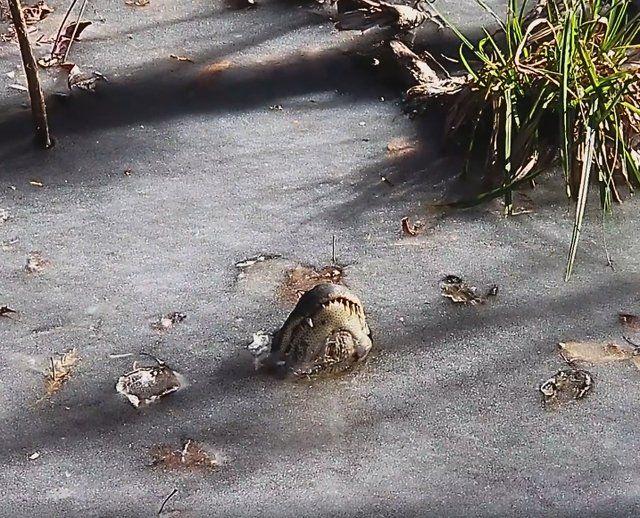 Gdy lód puści, zwierzęta zapewne powrócą do życia. /materiały prasowe