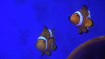 Gdzie jest Nemo? W Szczecinie