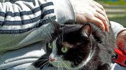 Gdzie lekarz nie może, tam kota poślij. W krakowskim szpitalu pacjentom pomagają mruczki