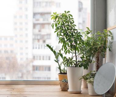Gdzie stawiać rośliny w domu, żeby najpiękniej rosły?