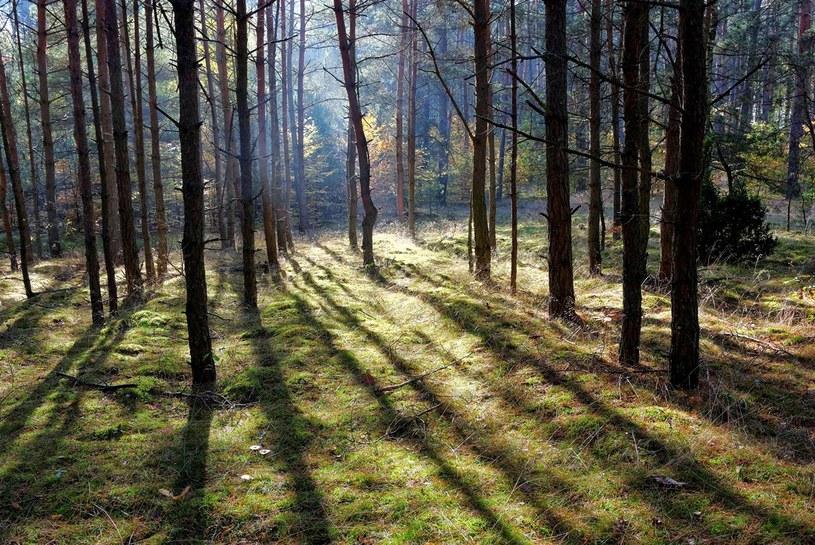 Gdzieś pośród tych malowniczych lasów kryją się pozostałości Zantyru. /Odkrywca