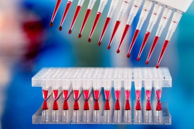 Genetyczne predyspozycje wystąpienia raka jąder rozszyfrowane? /123RF/PICSEL