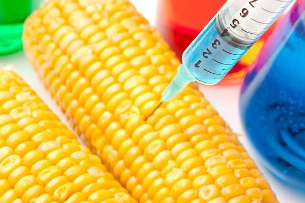 Genetycznie modyfikowane rośliny można spotkać np. w produktach żywnościowych /©123RF/PICSEL