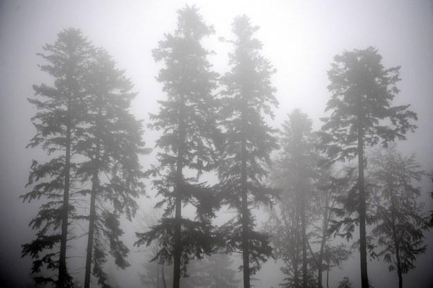 Gęste mgły wystąpią już ok. godz. 23 /Darek Delmanowicz /PAP