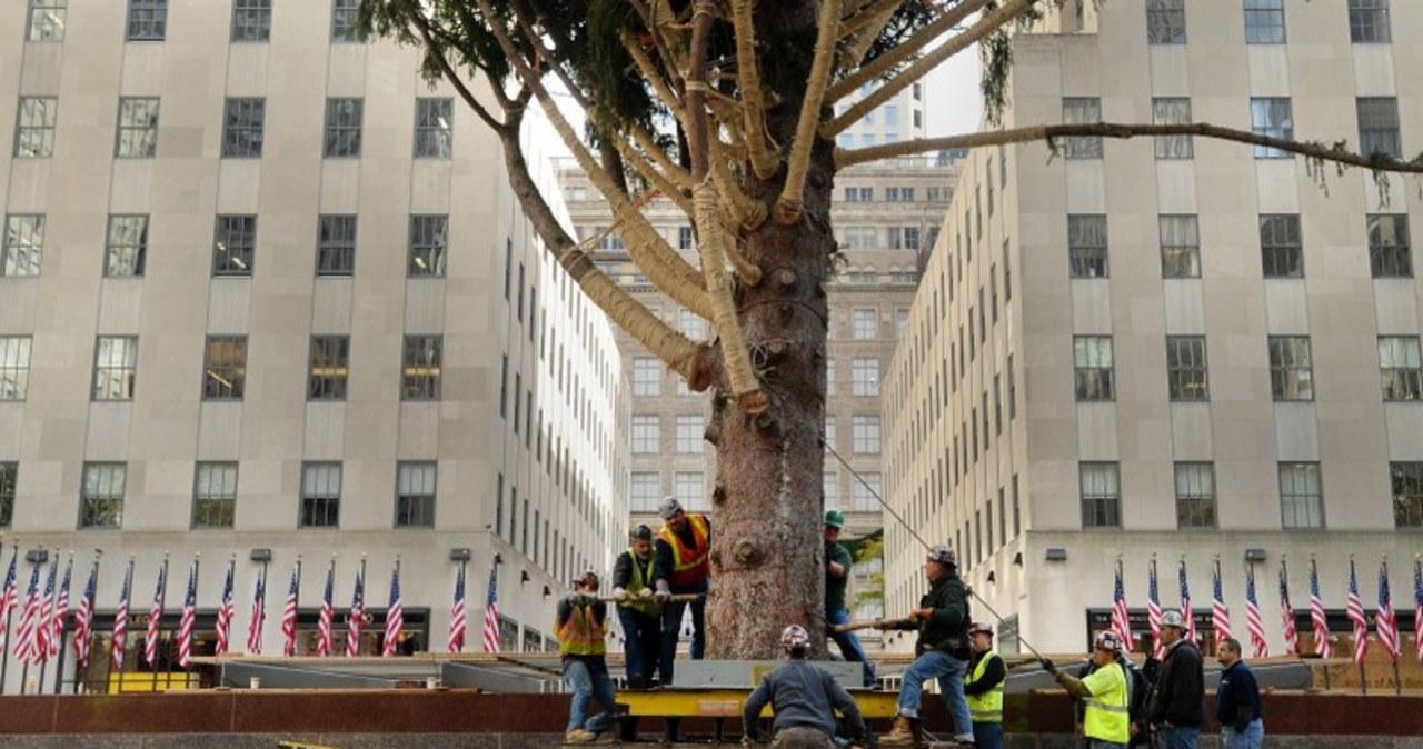 Gigantyczna choinka stanęła w Nowym Jorku